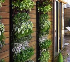 vertical garden diy vertical garden