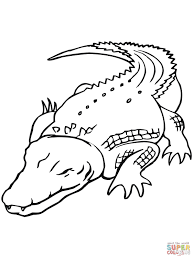 Small Picture Australian Saltwater Crocodile coloring page Free Printable