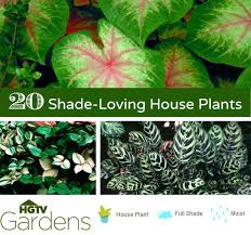 plants for shaded porch potted plants for shaded patio