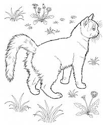 Download Coloring Pages. Warrior Cats Coloring Pages: Warrior Cats ...