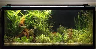 Die Aquarium Beleuchtung