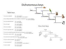 Dichotomous Flow Chart Microbiology Efficient Dichotomous Key Flow Chart 2019