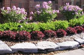 Small Picture Small Garden Design Shrubs For Landscaping Shrub landscaping ideas