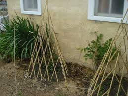 bamboo garden stakes. Trellis Trials Janes Journals Bamboo For Cucumbers Bunnings: Large Size Garden Stakes