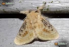 Moth Identification Chart Butterflies And Moths