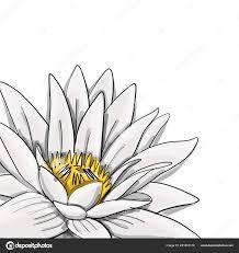 лотос лилия цветок воды эскиз для вашего дизайна векторное