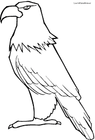 Small Picture Bald Eagle Coloring Page Draw Background Bald Eagle Coloring Page