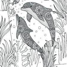 Bold Inspiration Free Dolphin Coloring Pages Printable Adult Page