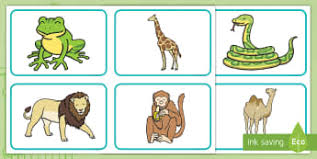 zoo picture cards