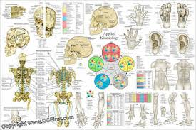 Applied Kinesiology Ak Poster 24 X 36 Chiropractic