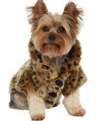 luxury leopard faux fur jacket fluffy coat pet dog cat warm winter clothes m