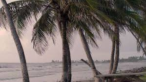 palm trees out over choppy dramatic sea royalty free stock