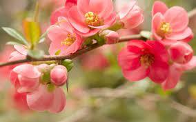 Cute Flower Backgrounds ...