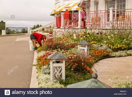 female gardener bent over tending to the gardens in front of the grand hotel on mackinac island michigan