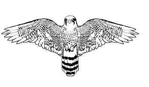 Small Picture Bird Animal Coloring Pages Bird Pages nebulosabarcom