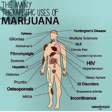 medical cannabis oil facts