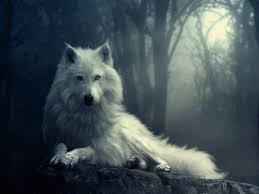 white wolf wallpaper. Delighful Wolf Wolves Images White Wolf HD Wallpaper And Background Photos Inside Wallpaper L