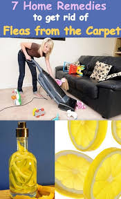 How To Get Rid Of Fleas On Furniture Concept