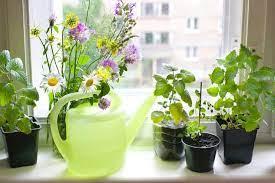 windowsill herb garden the complete
