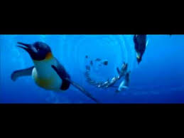 baby emperor penguins swimming. Delighful Baby Penguins Swimming For Baby Emperor