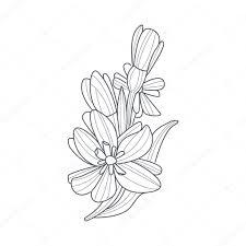塗り絵の水仙花白黒図面 ストックベクター Topvectors 114974848