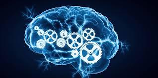 """Результат пошуку зображень за запитом """"как работает мозг"""""""