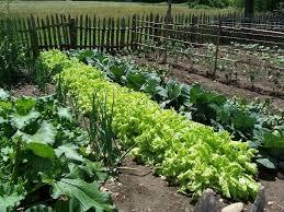 Small Picture Organic Garden Design Astonishing 3 cofisemco