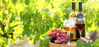 Produkcja wina gronowego – dodatkowy dochód - agrofakt.pl