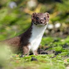 living like weasels by annie dillard aplogosblog
