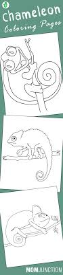 10 Best Chameleon Coloring Pages For