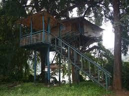 tree house resort. Hornbill Tree House Resorts In India Resort