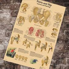 Us 3 98 Medical Anatomy Anatomical Pelvis And Hip Chart Classic Canvas Paintings Vintage Wall Posters Stickers Home Decor Gift In Painting