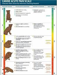 Veterinary Drug Interaction Chart Erni Sulistiawati E_sulistia16 On Pinterest