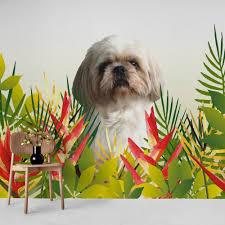 Buy Shih tzu dog leaves wallpaper ...