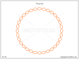 plasmid ppt powerpoint drawing diagrams  templates  images  slidesplasmid  ppt powerpoint drawing diagrams  templates  images  slides