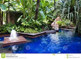 best hardy around bricks and fertilizer from plants around swimming pool staincausing metals to water texas friendly trees landscaping