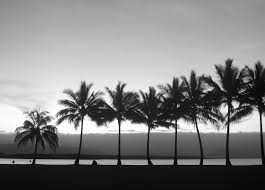 palm trees tumblr header. Palm Trees Tumblr Black And Header