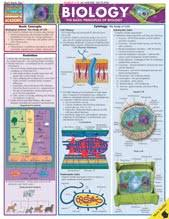 Biology Charts And Posters Laboratory Charts And Posters Biology