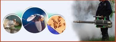 Image result for flies control experts in Brisbane