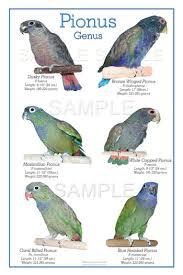 Galah Cockatoo Parrot Forum Parrot Owners Community