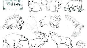 wild animal coloring pages animals winter free printable wild animal coloring pages animals winter free printable