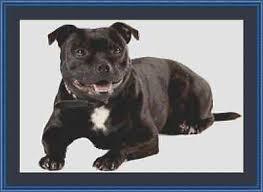 Staffy Colours Chart Cross Stitch Chart Kit Staffordshire Bull Terrier Dog