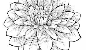 Stampabile Fiore Di Loto Da Colorare Disegni Da Colorare