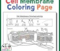 Cell Membrane Ws Simple Cell Membrane Diagram Plasma Membrane additionally  together with  furthermore Animal Cell Coloring Page Animal Cell Diagram Coloring Page likewise  also  together with Plasma Membrane Diagram Prokaryote Coloring Worksheet Answers furthermore Photosynthesis Coloring Activity Photosynthesis Review Key 2 9 moreover Biology Coloring Worksheets Biology Coloring Sheets Biology moreover Animal Cell Coloring Page Answers Unique Gallery Human Cell in addition Cell membrane coloring worksheet answers    Cell Coloring. on cell memne coloring worksheet answers