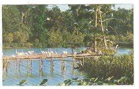 scene in bird city in jungle gardens at avery island louisiana 40 60s hippostcard