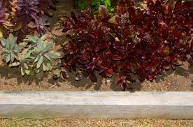 Decorative Stones For Flower Beds Landscaping Advice