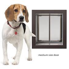 energy efficient wall mount dog door