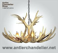real antler lamps for mule deer chandelier 6 8 lights 2 rustic s