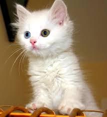 Мачки Images?q=tbn:ANd9GcTMLqRg8JaQqovwSAtkPt73yUSfcxvXnYtBZTgt-xFoRqaijwsRPw