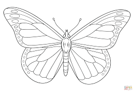 Painted Lady Butterfly Coloring Pages L